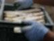 Auf dem Bild ist eine Kiste mit weißem Spargel. Zwei Hände mit Handschuhen halten die Kiste fest.