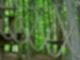 Mitten im Wald sind zwischen Bäumen Seile in Schlaufen gespannt. Im Hintergrund sieht man weitere Seile an Bäumen.