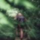 Zwischen Zweigen und Ästen steigt ein Mann mit Rucksack eine Holztreppe hinauf, die sich mitten in einem Wald befindet.