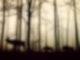 In einem nebligen Wald sieht man die Silhouette von einem Hirsch und zwei Wildschweinen.