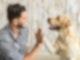 Ein Hund und ein Mensch geben sich eine High Five.