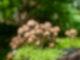 Auf grünem Moos stehen viele kleine Pilze.