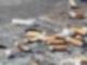 Auf dem Boden sieht man in Nahaufnahme jede Menge Zigarettenkippen liegen.